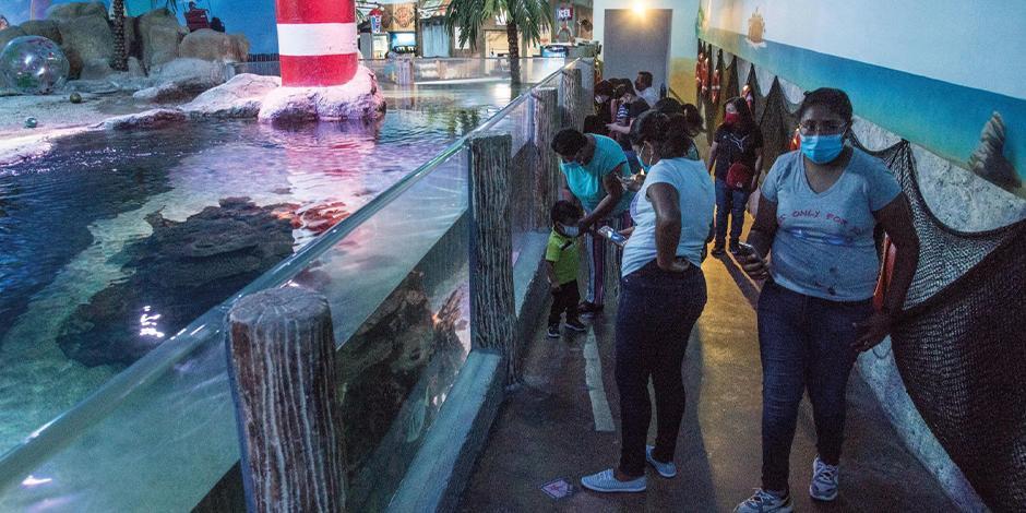 El Acuario Inbursa reabrió sus puertas al público y podrá entrar el 20 por ciento de su aforo. Cada visitante debe pasar por filtros sanitarios para ingresar; el lugar cuenta con medidas para evitar contagios.