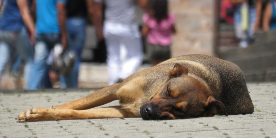 maltrato animal-carcel-multas