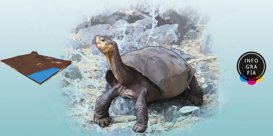 Fernanda, la Galápagos que abre una esperanza a la especie
