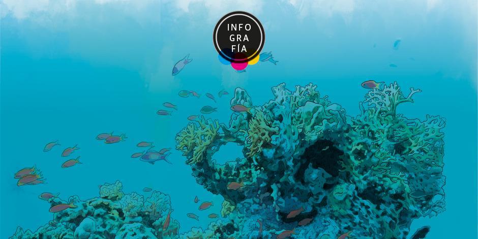 Arrecifes, clave en la oxigenación del planeta, en crisis por cambio climático