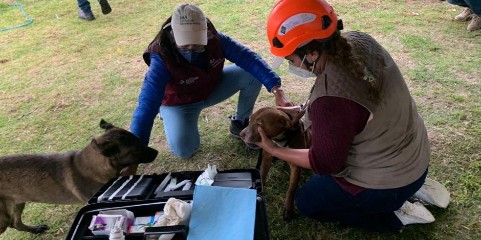 Perritos atrapados en socavón de Puebla