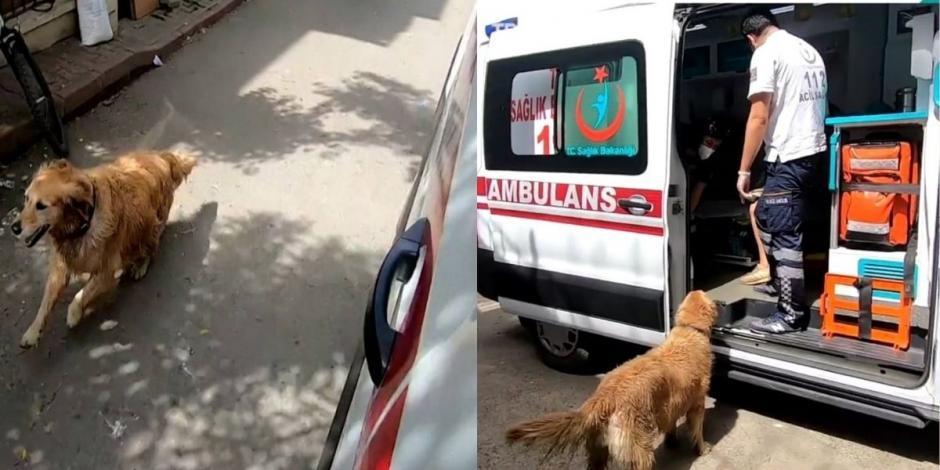 Perro persigue ambulancia