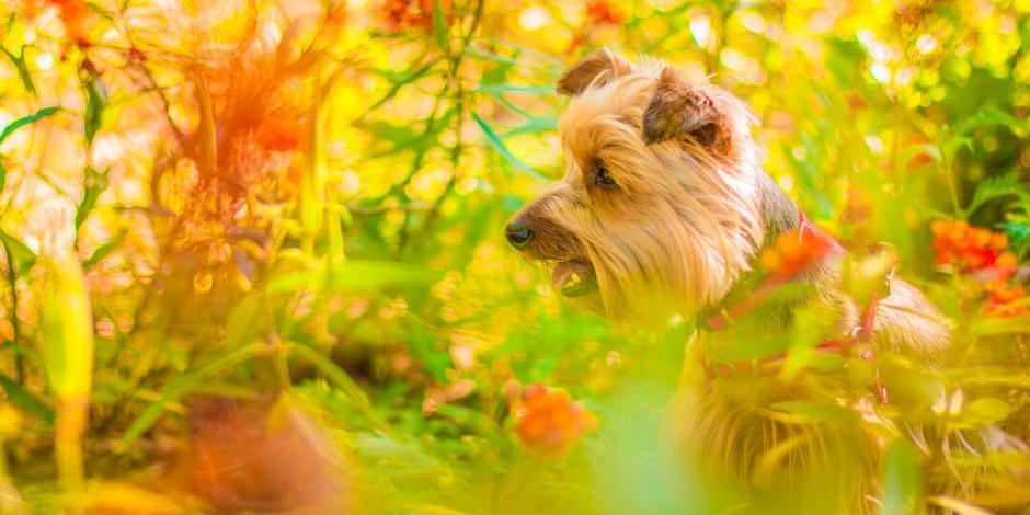plantas que causan depresión a tu perro