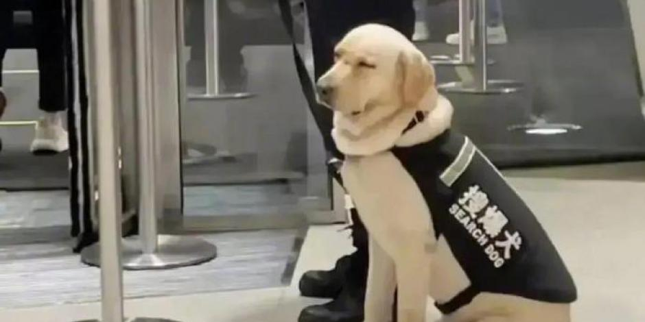 perro en el metro se queda dormidoo