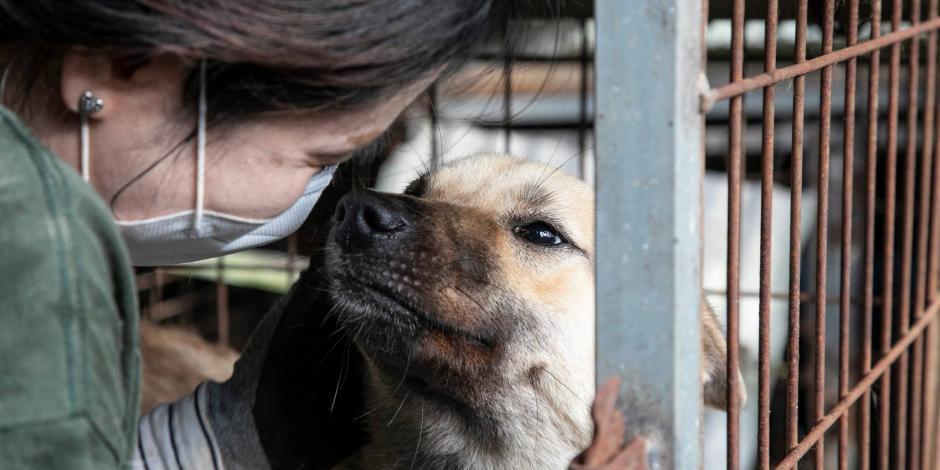 Fueron rescatados 65 perros que serían asesinados para vender su carne en un restaurante
