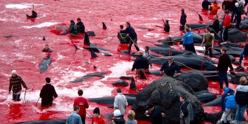 El asesinato récord de delfines está desatando la indignación en muchos países