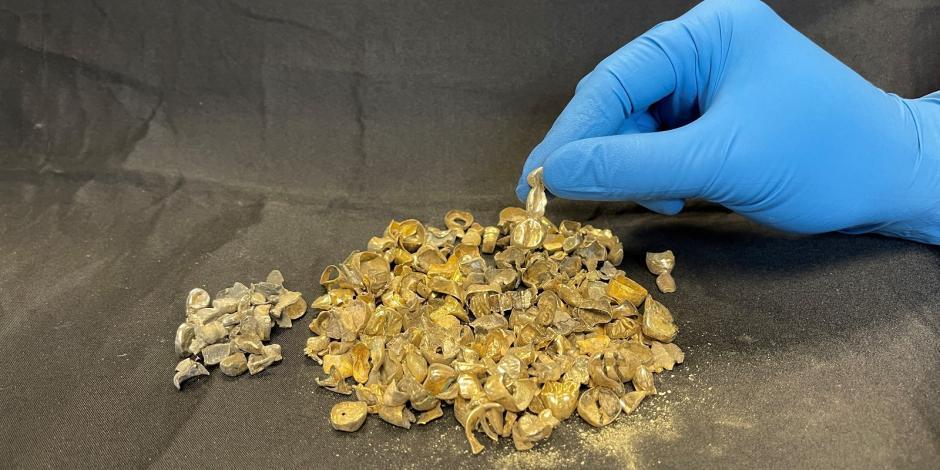 Los hombres llevaban casi un kilogramo de oro en sus bocas