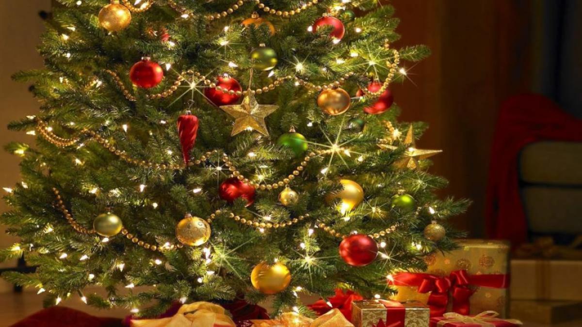 Cuándo Se Debe De Poner El árbol De Navidad Aquí Te Decimos